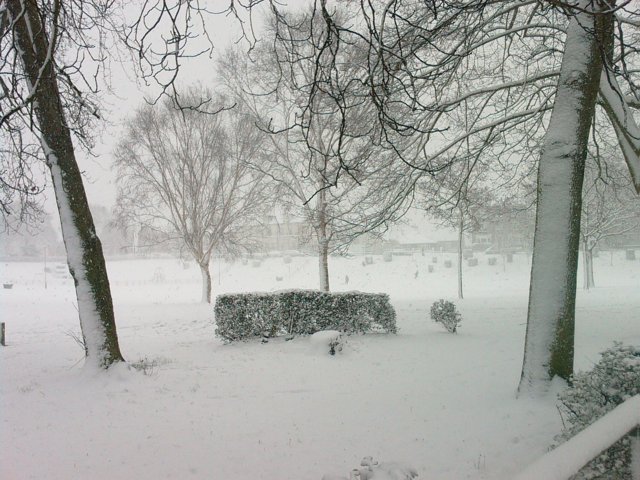 winter-snow-scene-christmas-2009.jpg