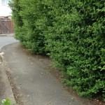 Overgrown hedges