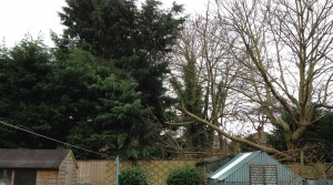 The Council is being asked to intervene following fears expressed by some residents about the safety of large trees in the area. Large branches fell off during recent high winds.