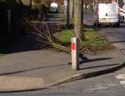 Backfield lane Knapton Lane fallen tree branch