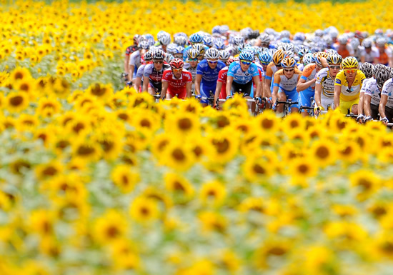 Cyclists and yellow flowers