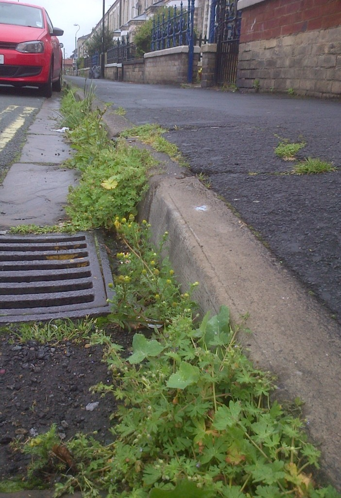 Weeds in Beaconsfield Street in Acomb June 2014