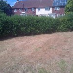 Grass cut by Council contractors but hedge left