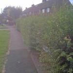 Overgorn hedges blocking street signs