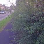 Overgrown hedges blocking footpaths