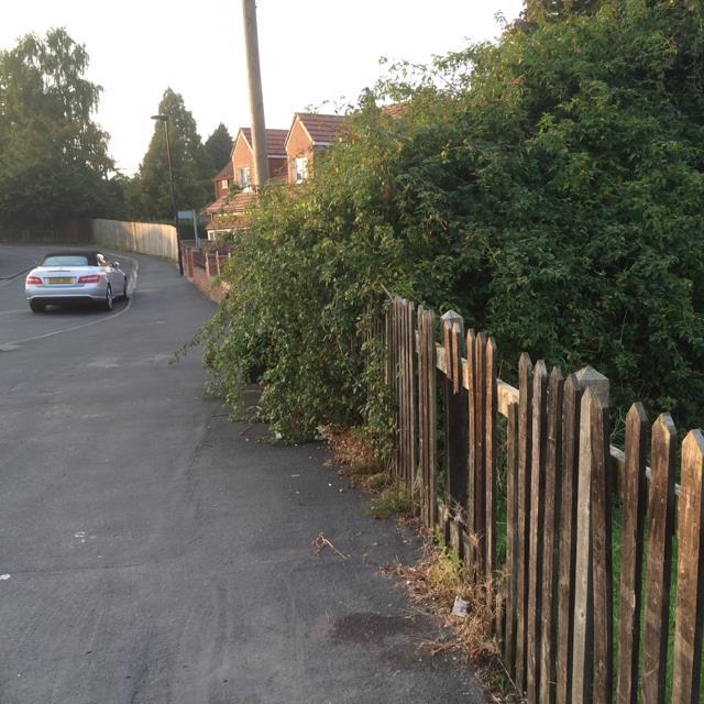 Thorn bush overhanging public footpath