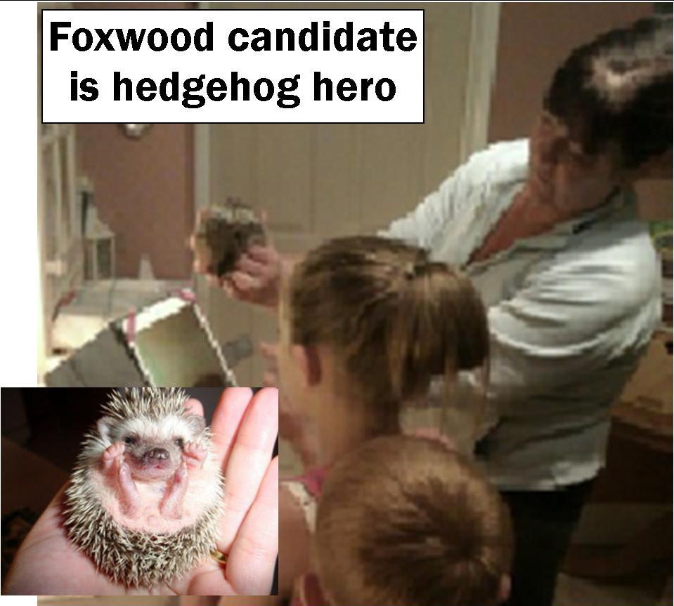 Hegehog hero