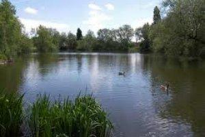 Chapmans Pond