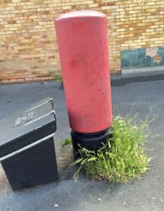 Pillar box weeds at Foxwood