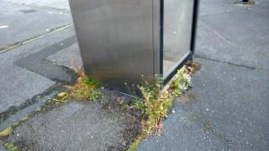 Phone box weeds Foxwood