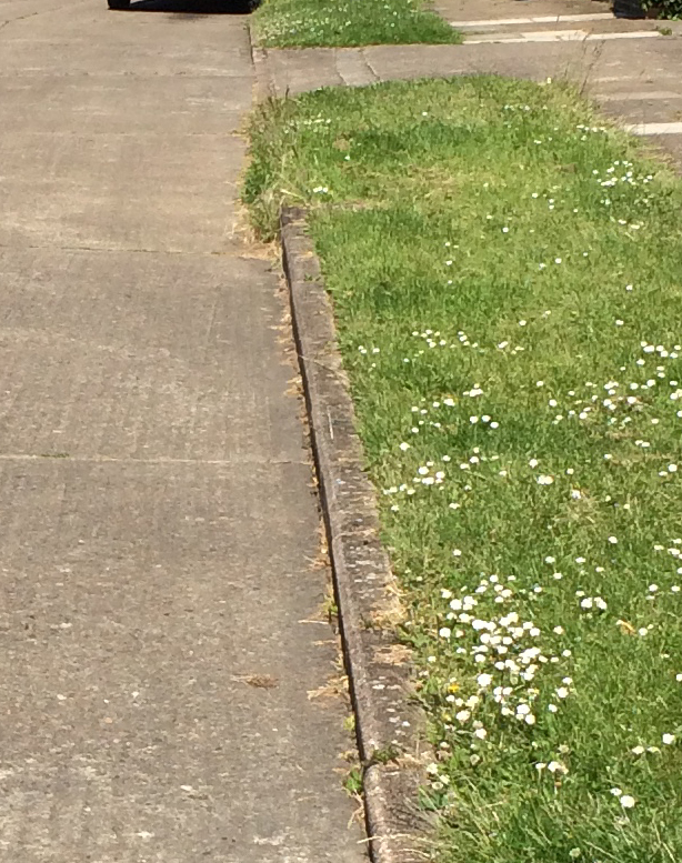Weeds growing in Queenswood Grove gutters