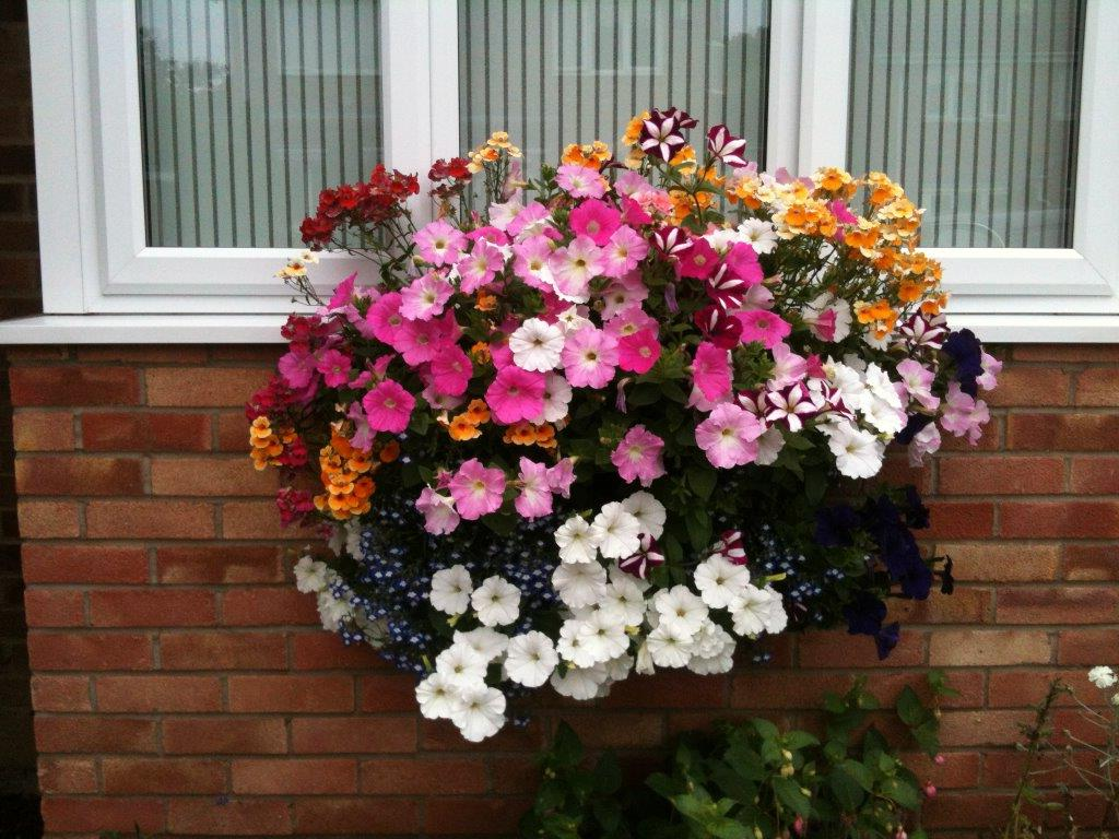 Best hanging Basket