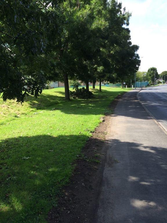 Broken branch on Foxwood Lane
