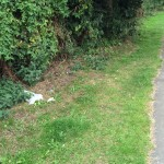 Dumping on Grange Lane