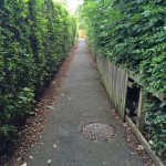 Hedges obstricting Grange Lane snicket