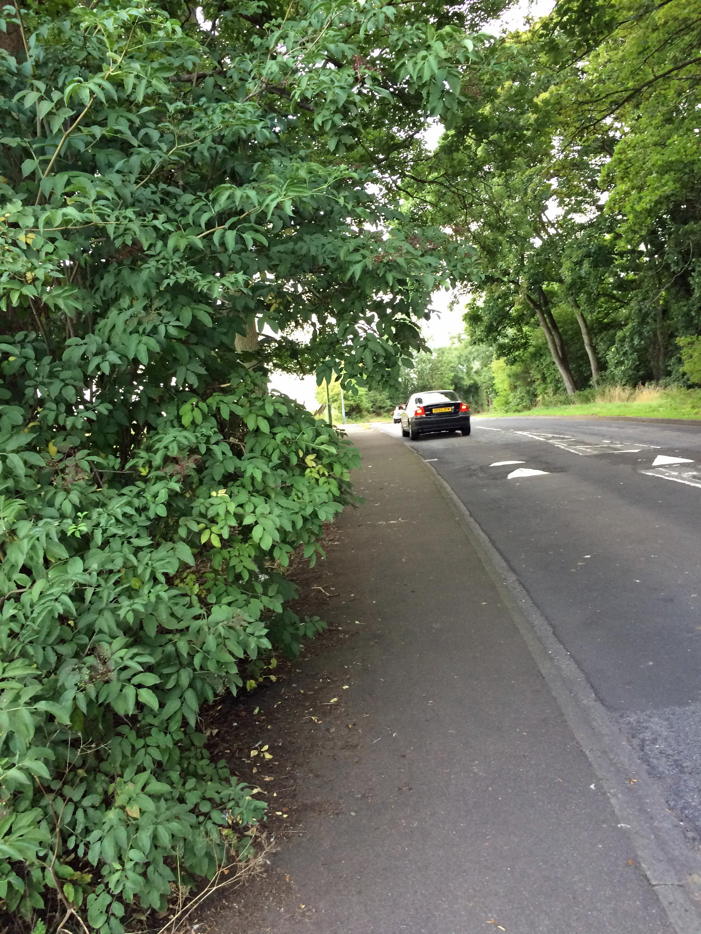 Bushes blocking the public footpath also on Foxwood Lane