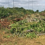 Traveller camp Moor Lane cut down trees and bushes