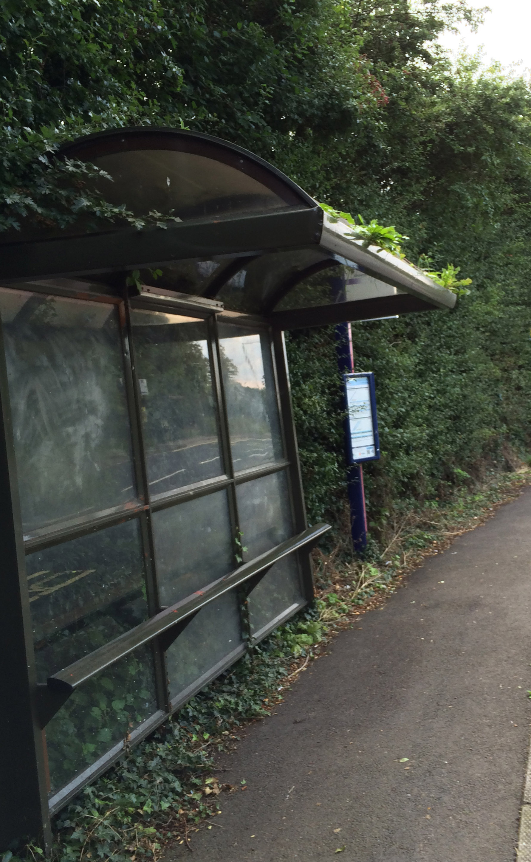 Weeds overgrowing a bus shelter in Foxwood Lane