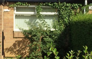 Window engulfed by weeds
