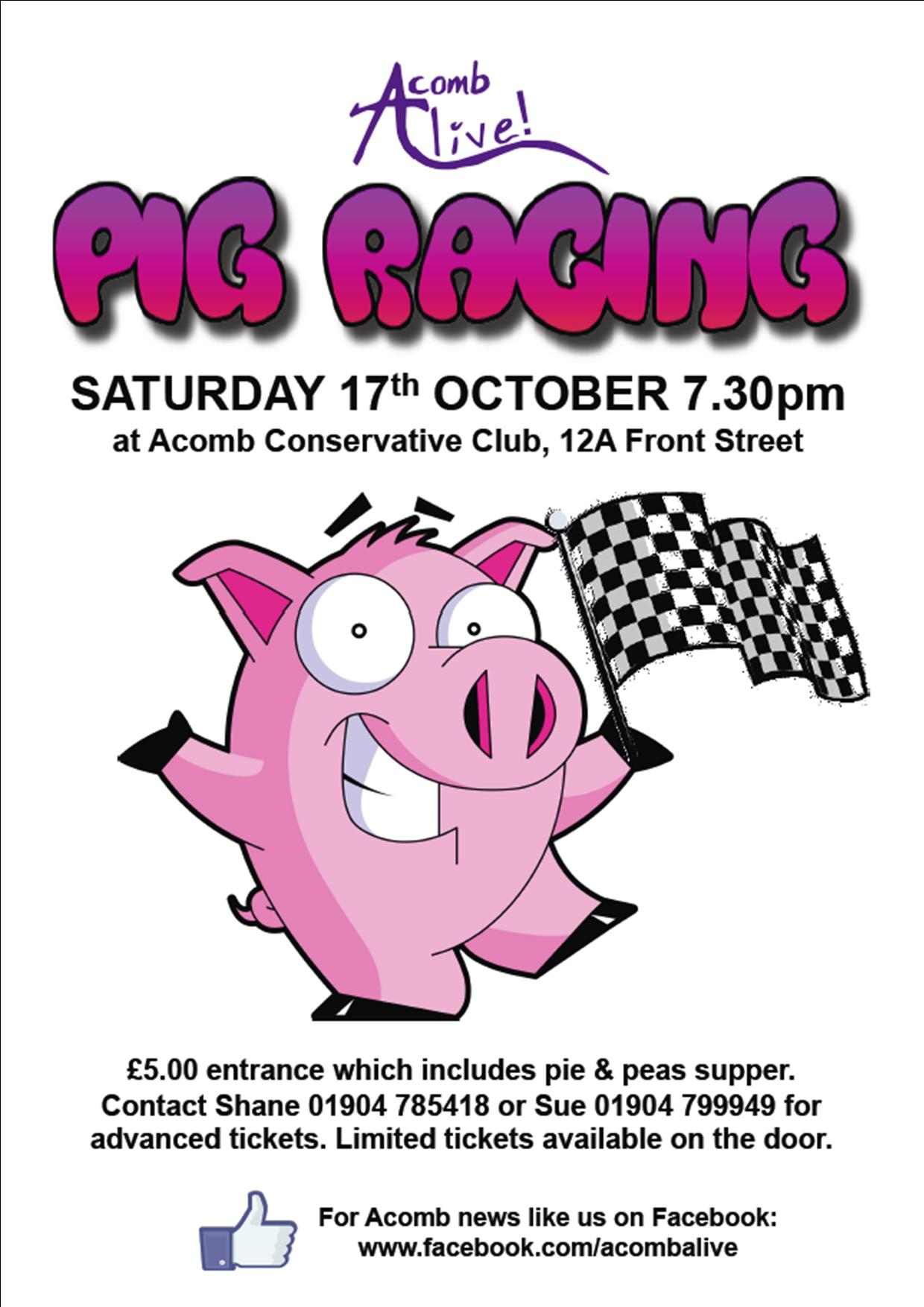 Pig racing 17th Oct 2015