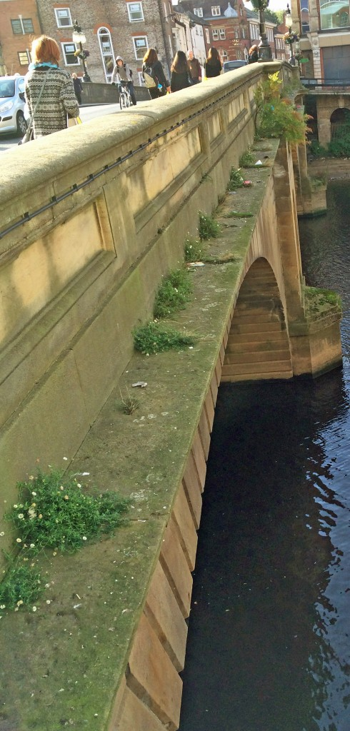Weeds still growing on Ouse Bridge