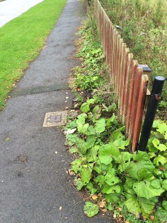 Weeds are still a problem on some footpaths