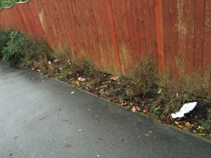 Litter in over gronw hedge - Tithe Close snicket