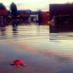 floods childs toy