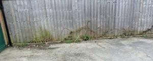 Dijon Avenue weeds