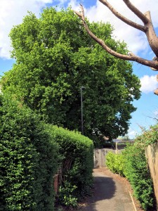 Overgrown trees prompt security fears