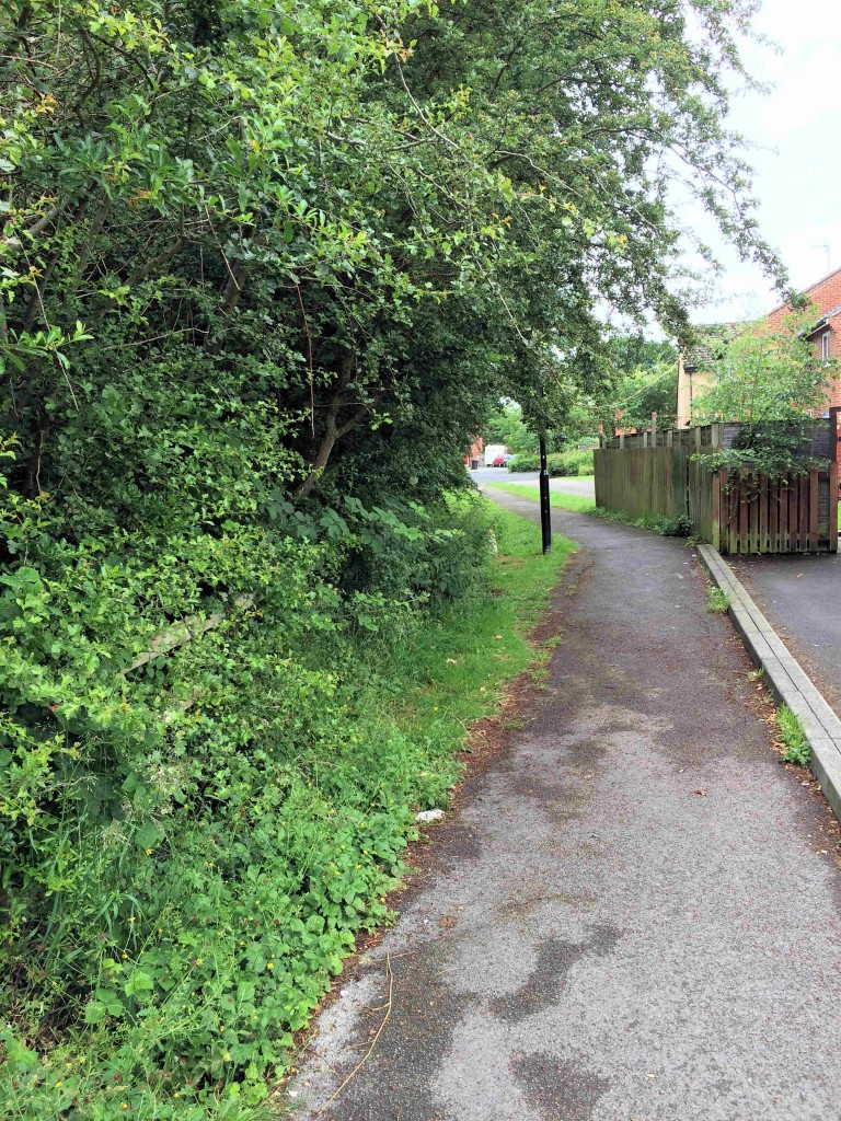 Hedge Overgrowing Bellwood Drive snicket