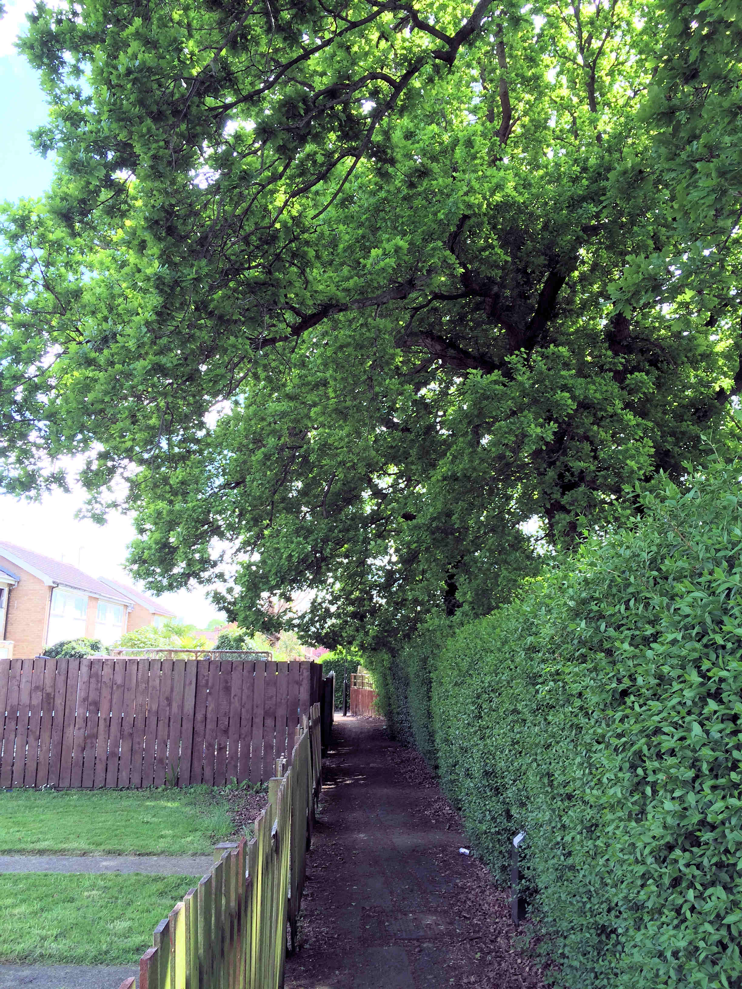 Trees on Burgess Walk