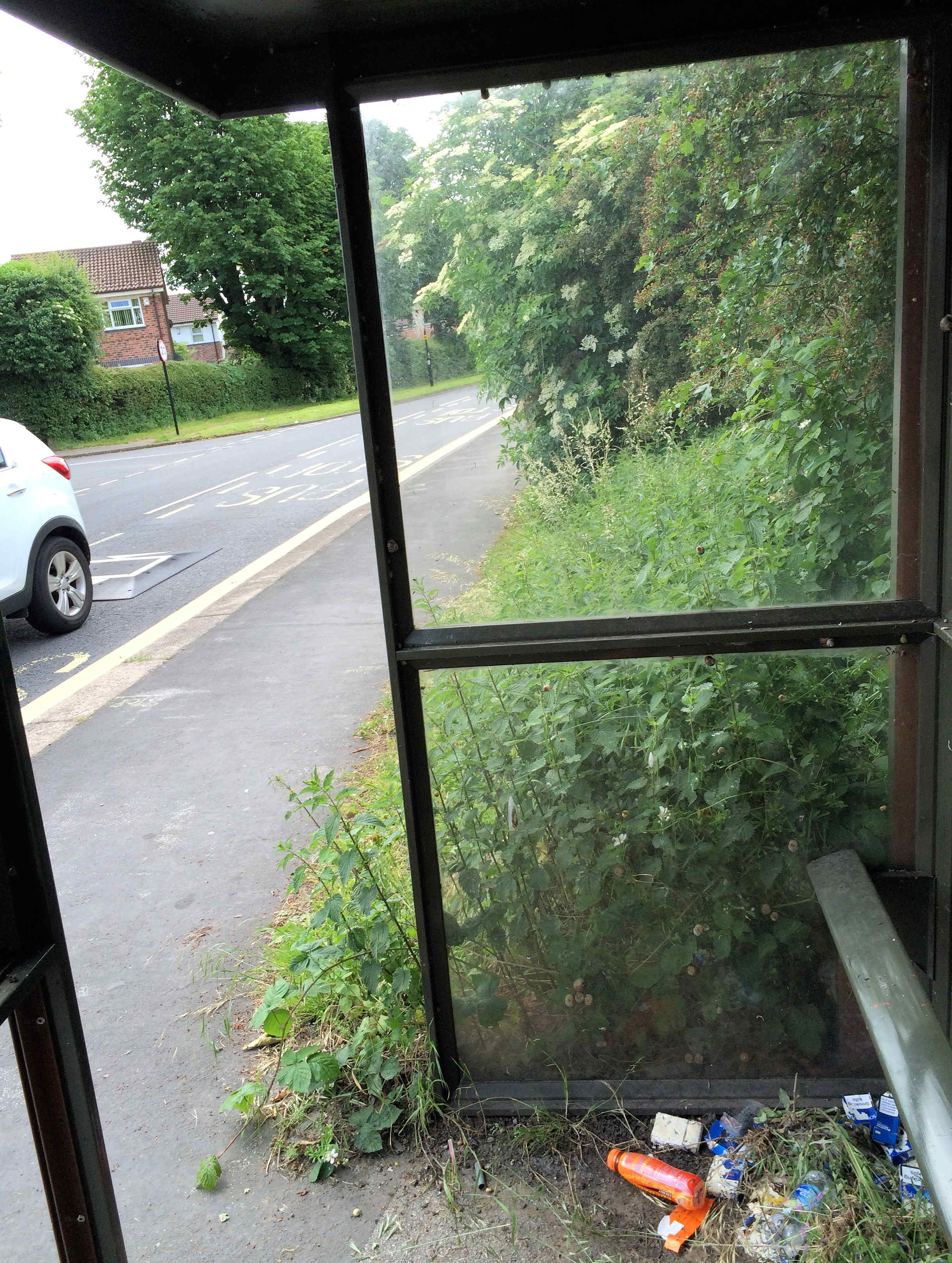 View from Askham Lane bus shelter. Reported two months ago the shelter is still engulfed by nettles and rubbish. It is impossible to see approaching busses from within the shelter.