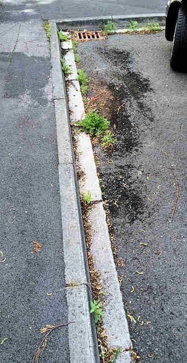 Weeds in gutters