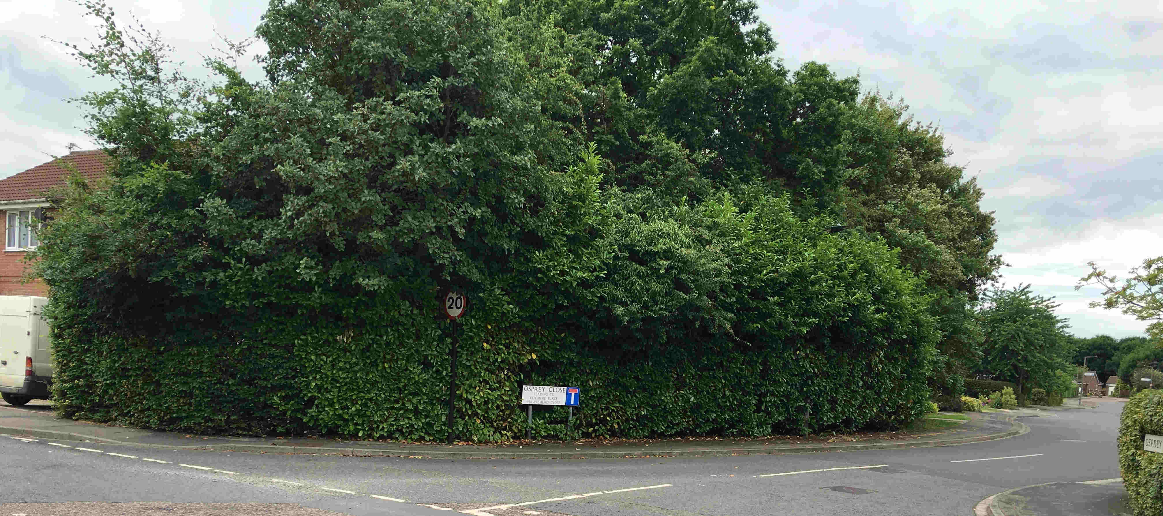 Acomb Wood Drive/Osprey Close hedge cut