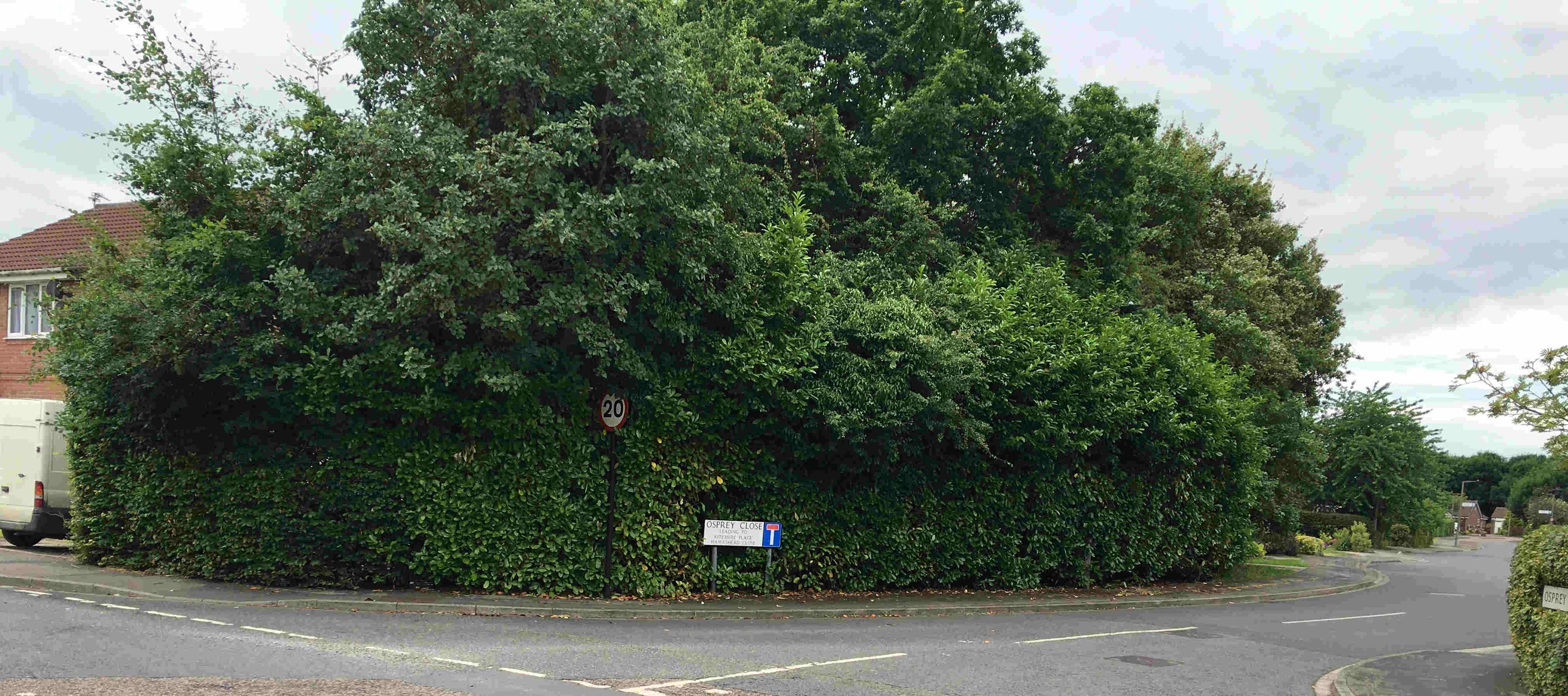 Acomb Wood Drive/Osprey Close hedge cut