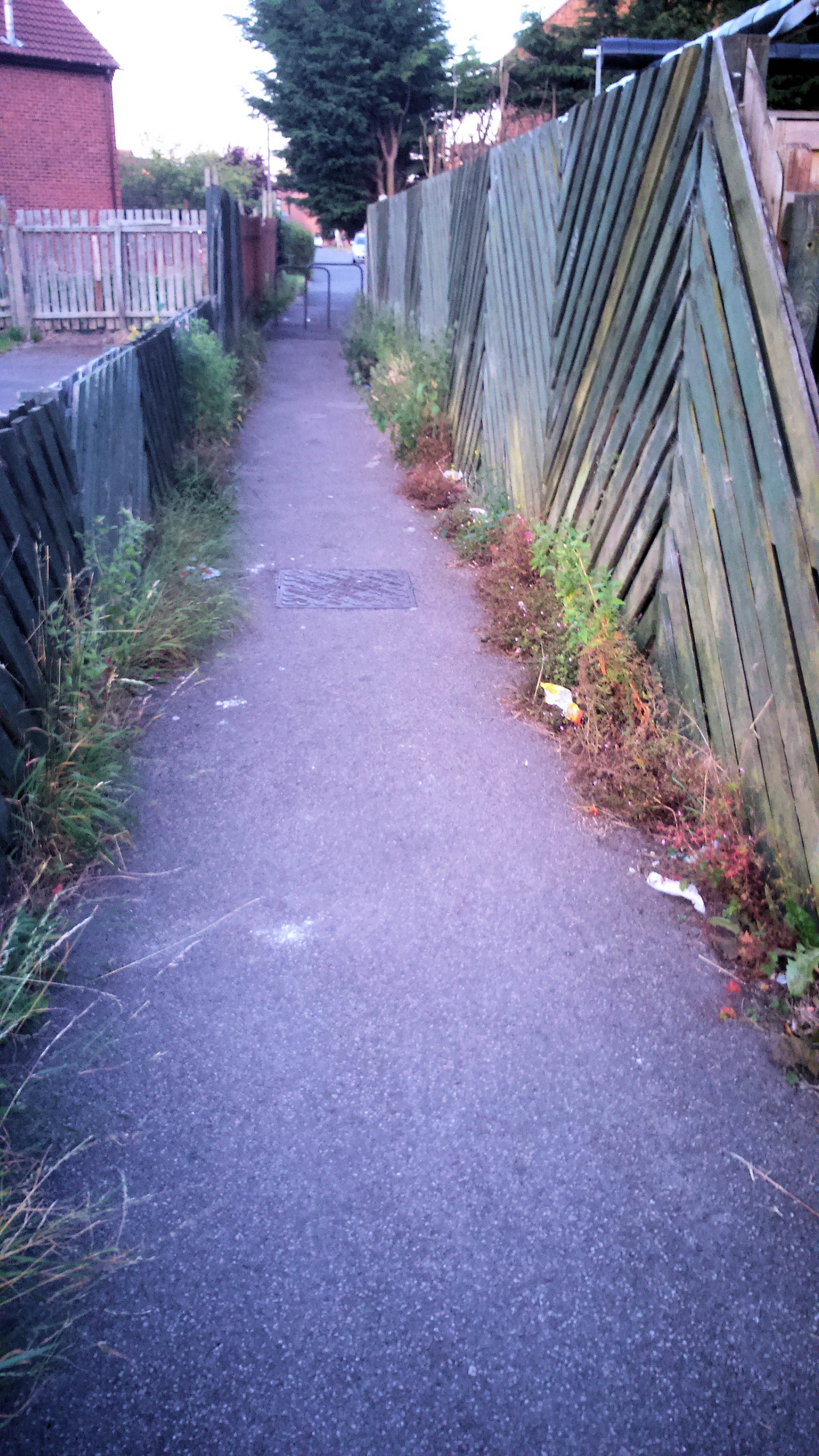 Weeds on Spindal Close snicket