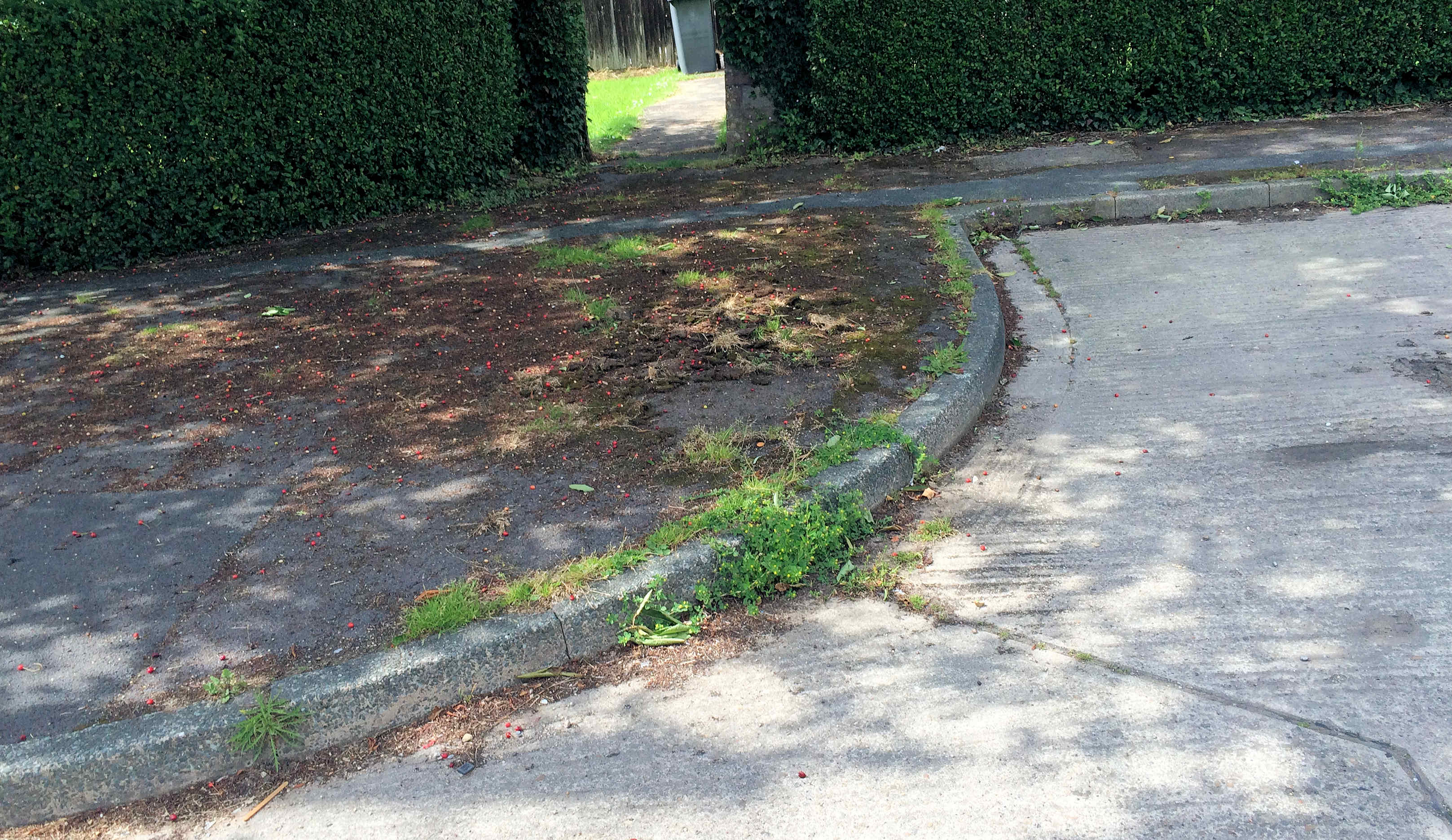 Seems the weed growth on footpaths in Walton Place hasn't received attention yet. We've asked for the weedkilling team to return