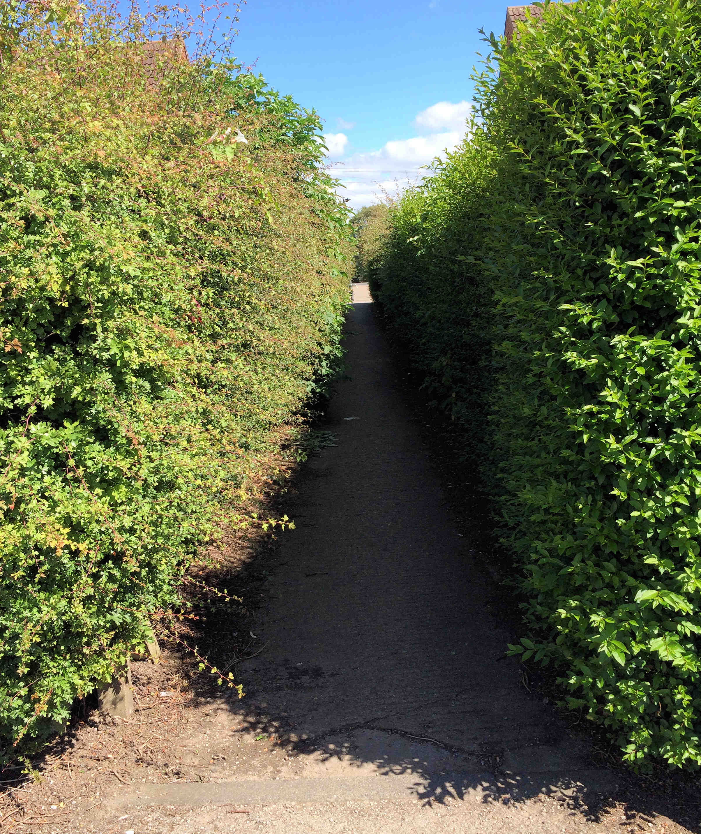 Recent wet/sunny weather has accelerated the growth of hedges in the area. These in Westfield Place are now impeding a right of way.