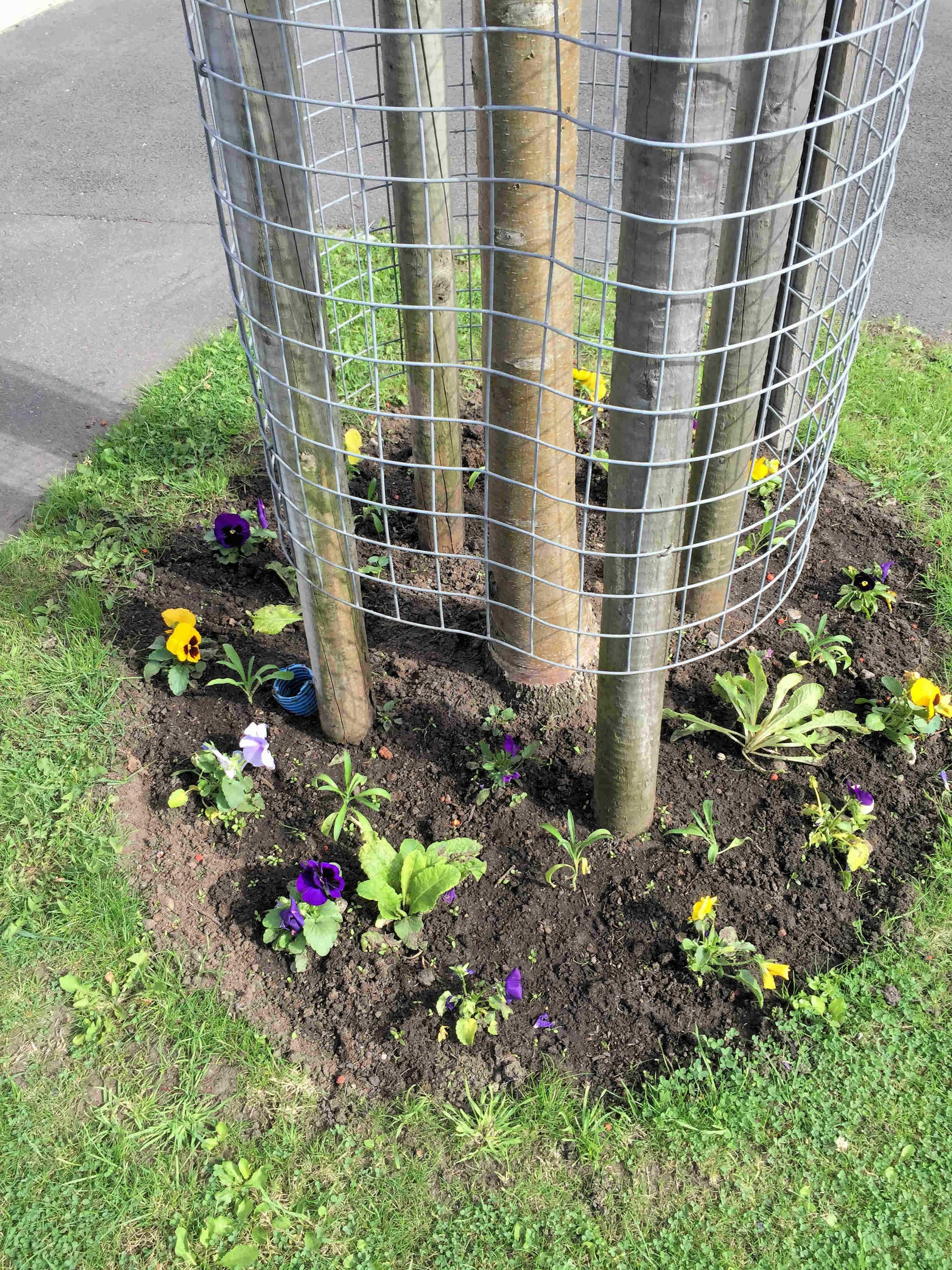 Lowfields verge flowers
