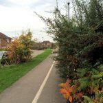 Hedge overgrowing cycle path back Martin Cheeseman Court