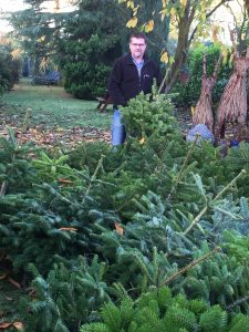 Christmas trees have been delivered for display in Acomb