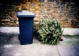 christmas-tree-recycling-trash-fl-560x400