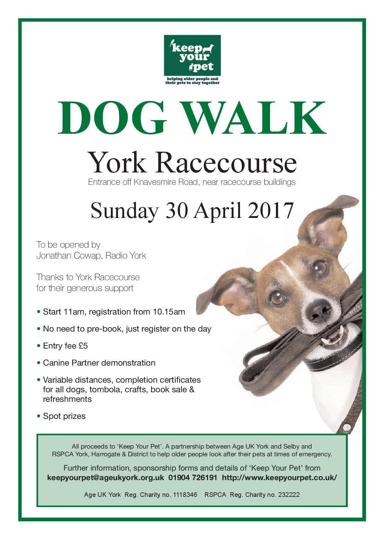 York Racecourse Dog Walk